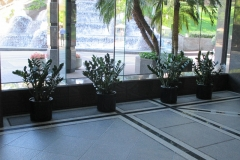 indoor-landscaping-plant-services-los-angeles-13