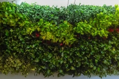 indoor-landscaping-plant-services-los-angeles-26