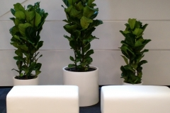 indoor-landscaping-plant-services-los-angeles-28