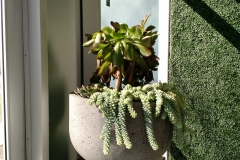 indoor-landscaping-plant-services-los-angeles-32