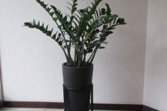 indoor-landscaping-plant-services-los-angeles-8