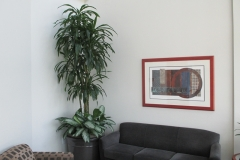 indoor-landscaping-plant-services-los-angeles-9
