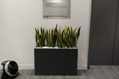 indoor-landscaping-plant-services-los-angeles-36