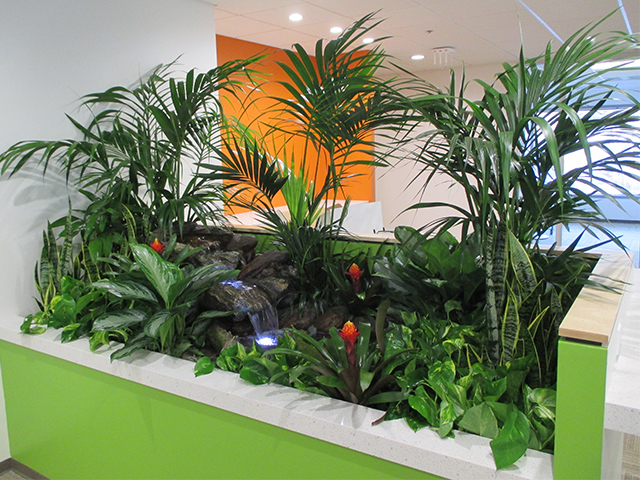 Tropical Stream Interior Landscape Project