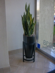indoor-landscaping-plant-services-los-angeles-1