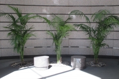 indoor-landscaping-plant-services-los-angeles-11