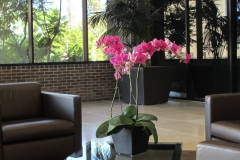indoor-landscaping-plant-services-los-angeles-14