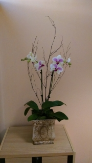 indoor-landscaping-plant-services-los-angeles-19