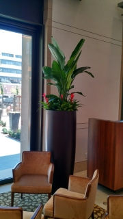 indoor-landscaping-plant-services-los-angeles-21