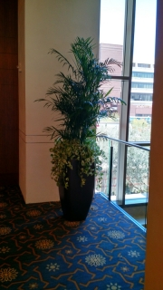 indoor-landscaping-plant-services-los-angeles-23