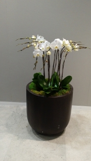 indoor-landscaping-plant-services-los-angeles-42
