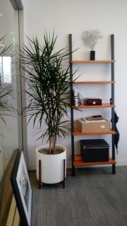 indoor-landscaping-plant-services-los-angeles-44