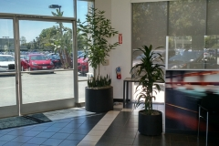 indoor-landscaping-plant-services-los-angeles-50