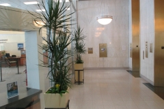 indoor-landscaping-plant-services-los-angeles-6