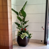 indoor-landscaping-plant-services-los-angeles-22
