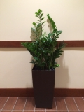 indoor-landscaping-plant-services-los-angeles-25