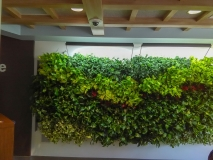 indoor-landscaping-plant-services-los-angeles-27