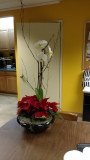indoor-landscaping-plant-services-los-angeles-31