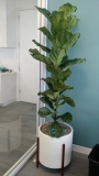indoor-landscaping-plant-services-los-angeles-45