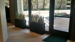 indoor-landscaping-plant-services-los-angeles-48